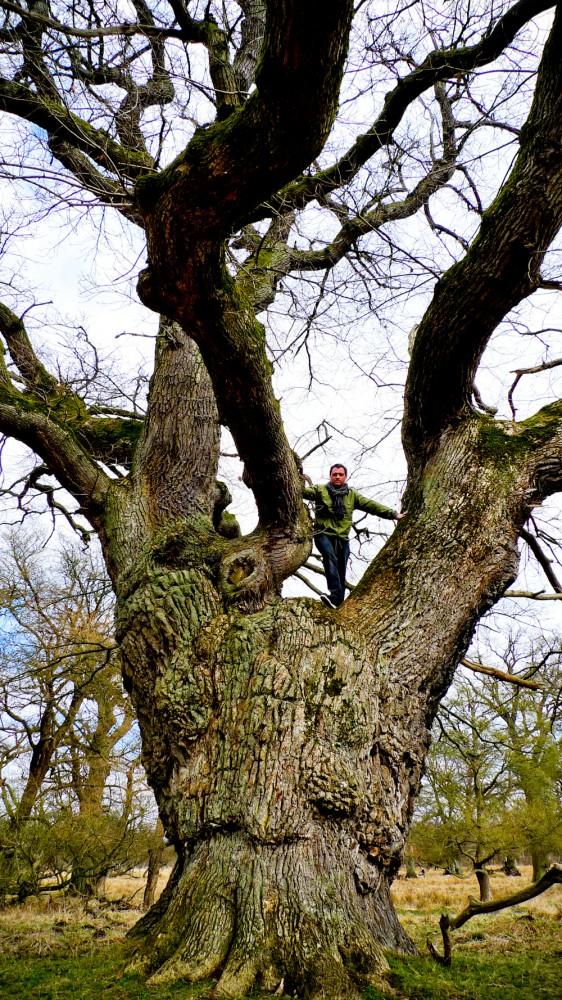 2010-04-10_matt_climbing_tree_01