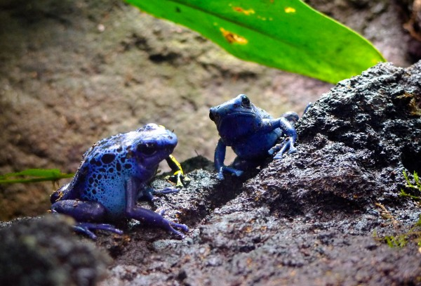 2010-05-13_frogs_01